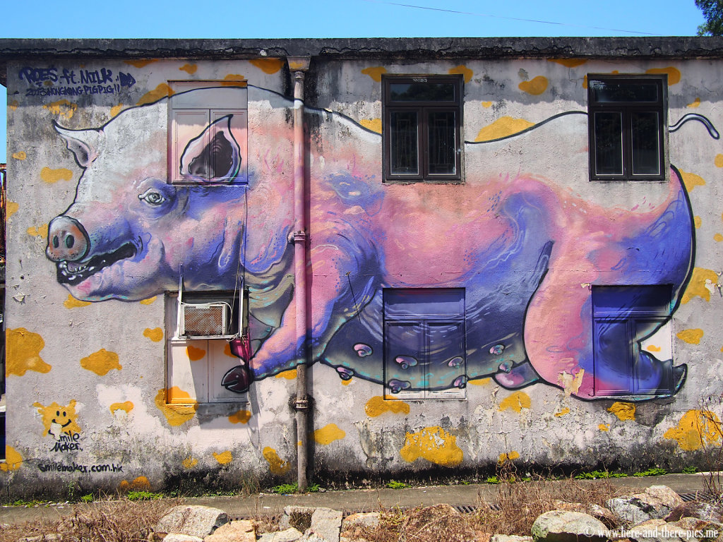 Pig graff in Lamma Island, in hong kong